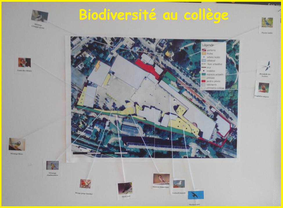 biodiversité au collège Assomption Rennes