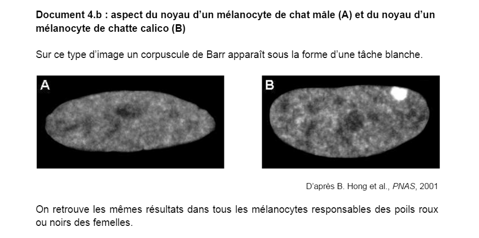 melanocyte SVT Bac 14