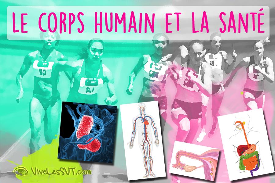 Corps humain et santé cycle 4 programmes SVT collège