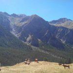 Géologie Alpes géotraverse SVT chaîne de montagne (63)