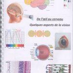 De l'oeil au cerveau quelques aspects de la vision – SVT 1ère (1)