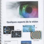 De l'oeil au cerveau quelques aspects de la vision – SVT 1ère (3)