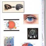De l'oeil au cerveau quelques aspects de la vision – SVT 1ère (4)