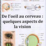 De l'oeil au cerveau quelques aspects de la vision – SVT 1ère (6)