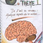 De l'oeil au cerveau quelques aspects de la vision – SVT 1ère (9)