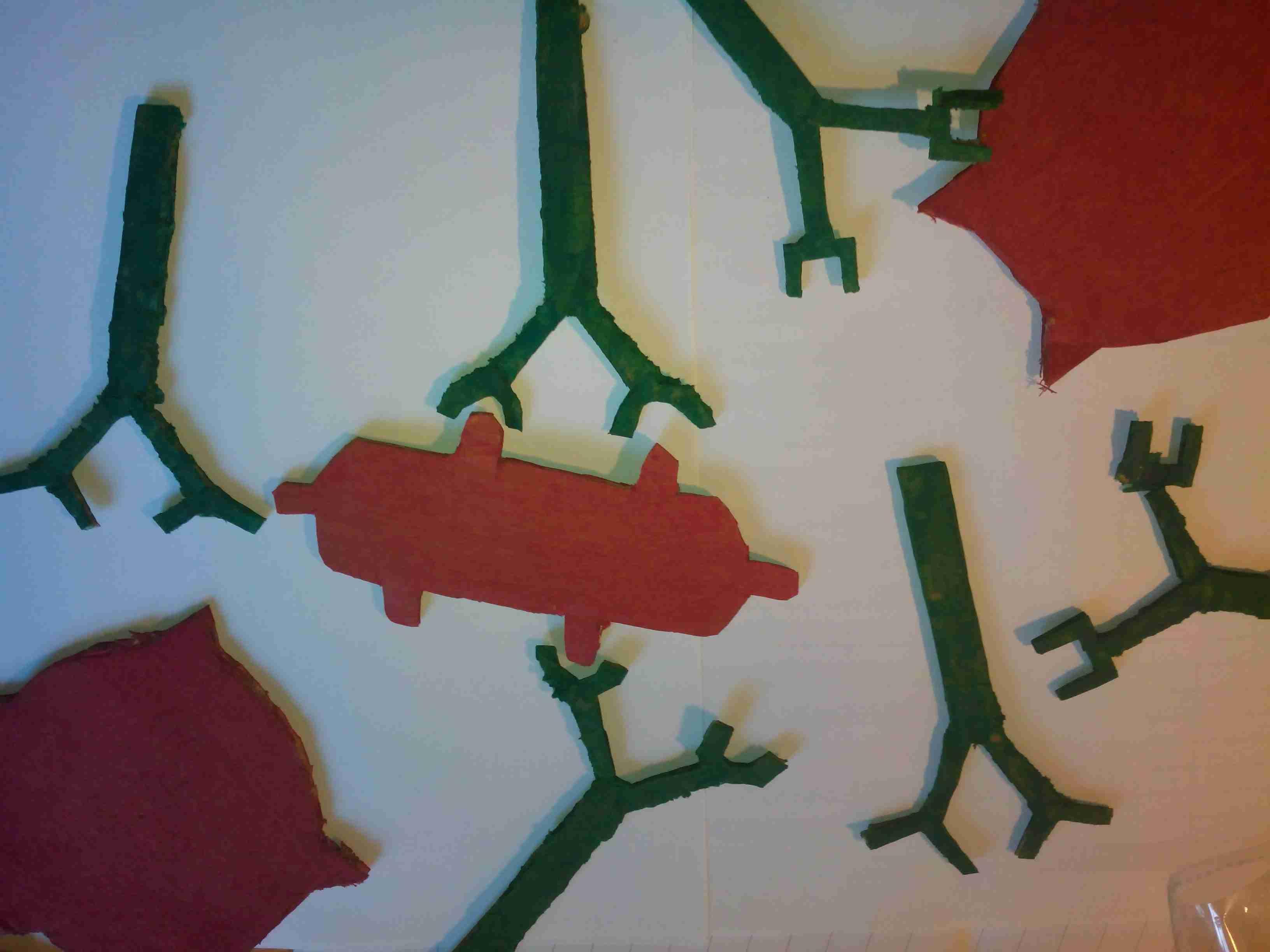 Maquettes D Anticorps Et D Antig 232 Nes En 3 232 Me Vive Les Svt