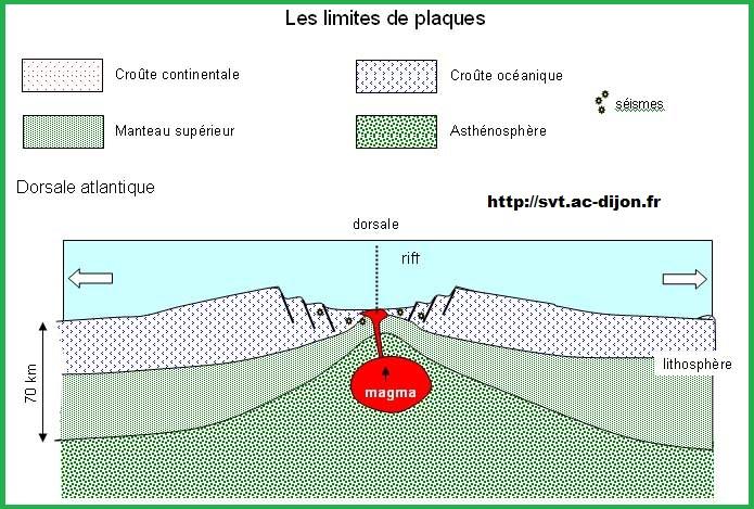 limite de plaque dorsale SVT