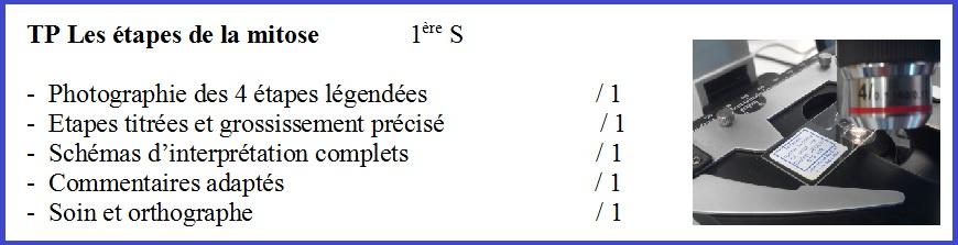 évaluation TP mitose SVT
