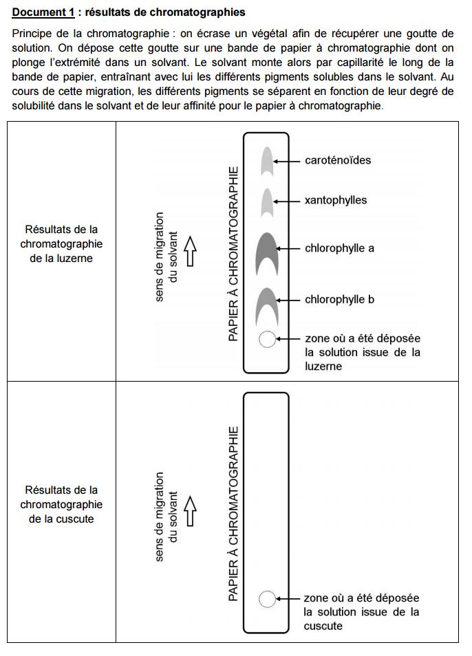 doc 1 chromatographie