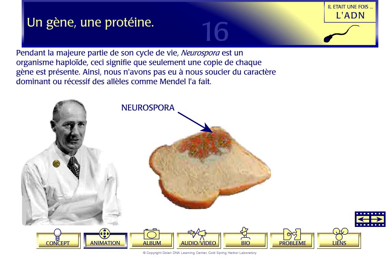 animation gène protéine SVT 1ère S