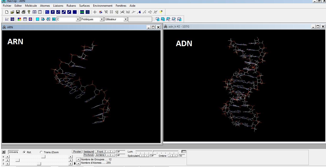 rastop comparaison ADN ARN