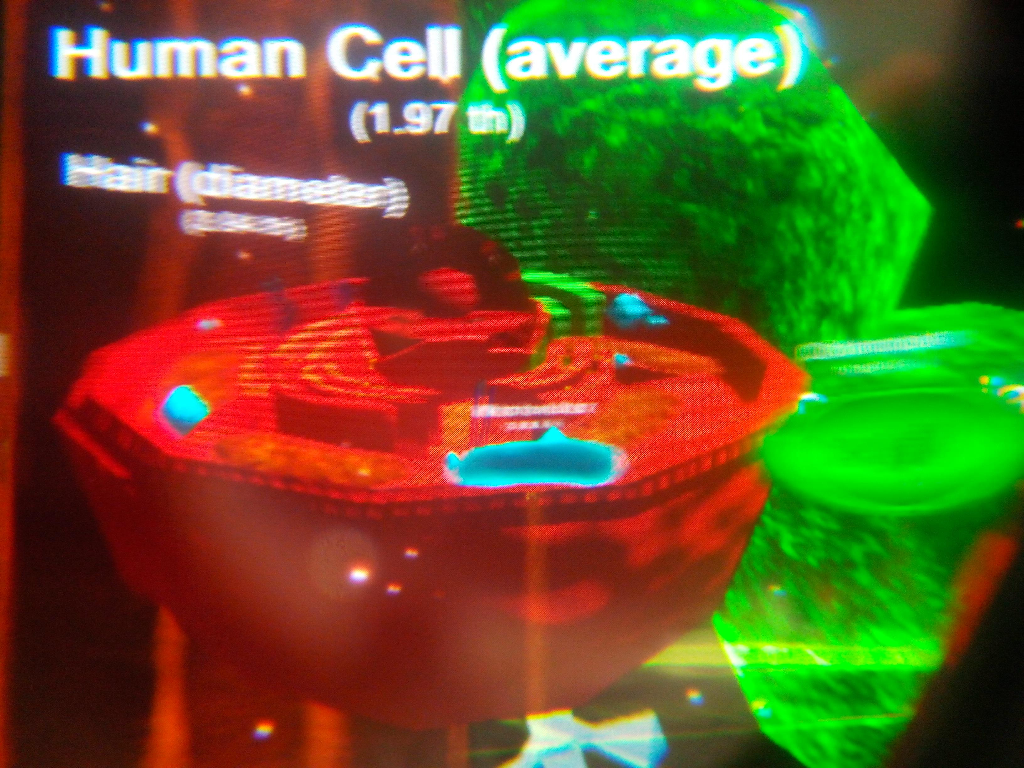 Réalité virtuelle SVT cellule (1)
