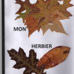Herbier collège SVT 6ème (12)