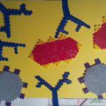 Maquettes anticorps antigène SVT complexe immun réaction immunitaire (10)