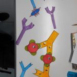 Maquettes anticorps antigène SVT complexe immun réaction immunitaire (27)