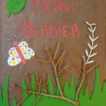Herbier collégiens (13)