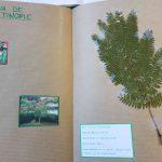 Herbier collégiens (14)