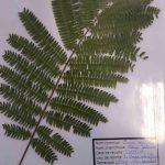 Herbier collégiens (19)