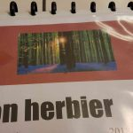 Herbier collégiens (21)