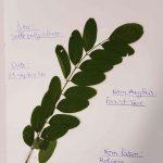 Herbier collégiens (5)