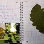 Herbier collégiens (6)