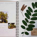 Herbier collégiens (8)