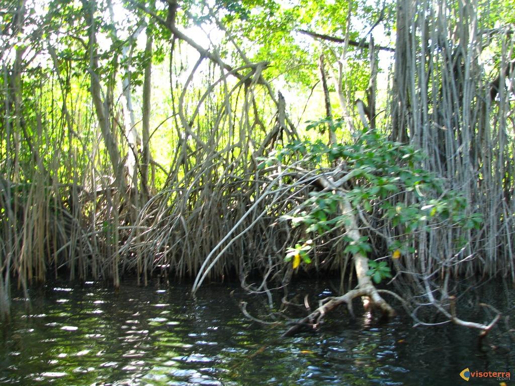 Zoom sur les mangroves