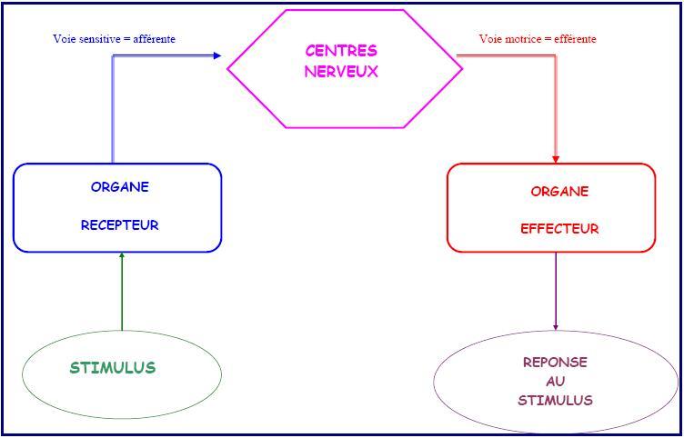 bilan-systeme-nerveux