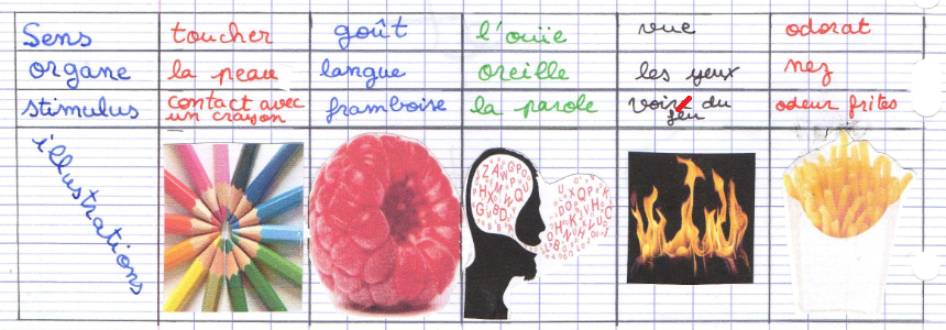 organe des sens système nerveux
