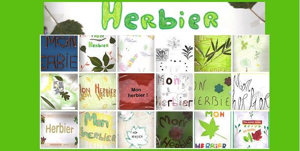 svt-6eme-herbier