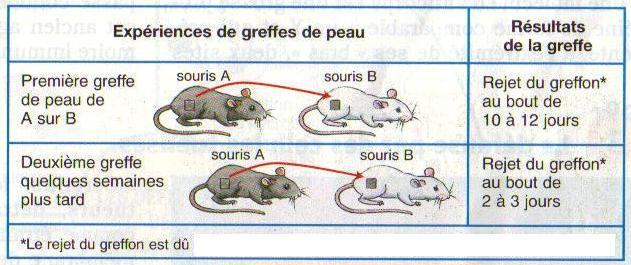 greffe