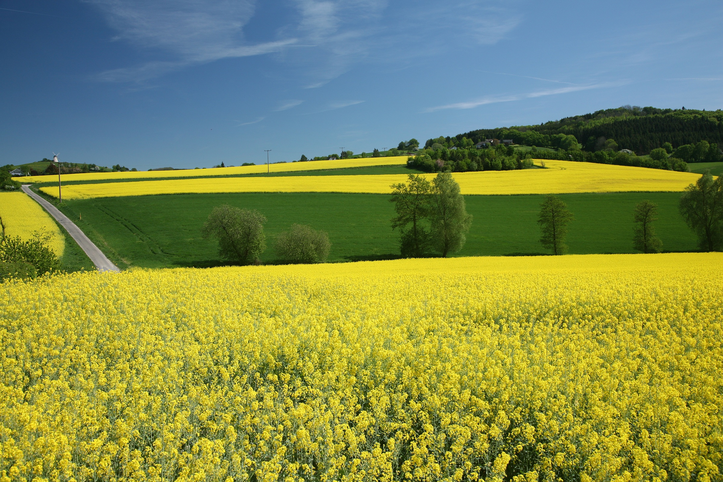 Quelles plantes peut-on transformer en biocarburants ?