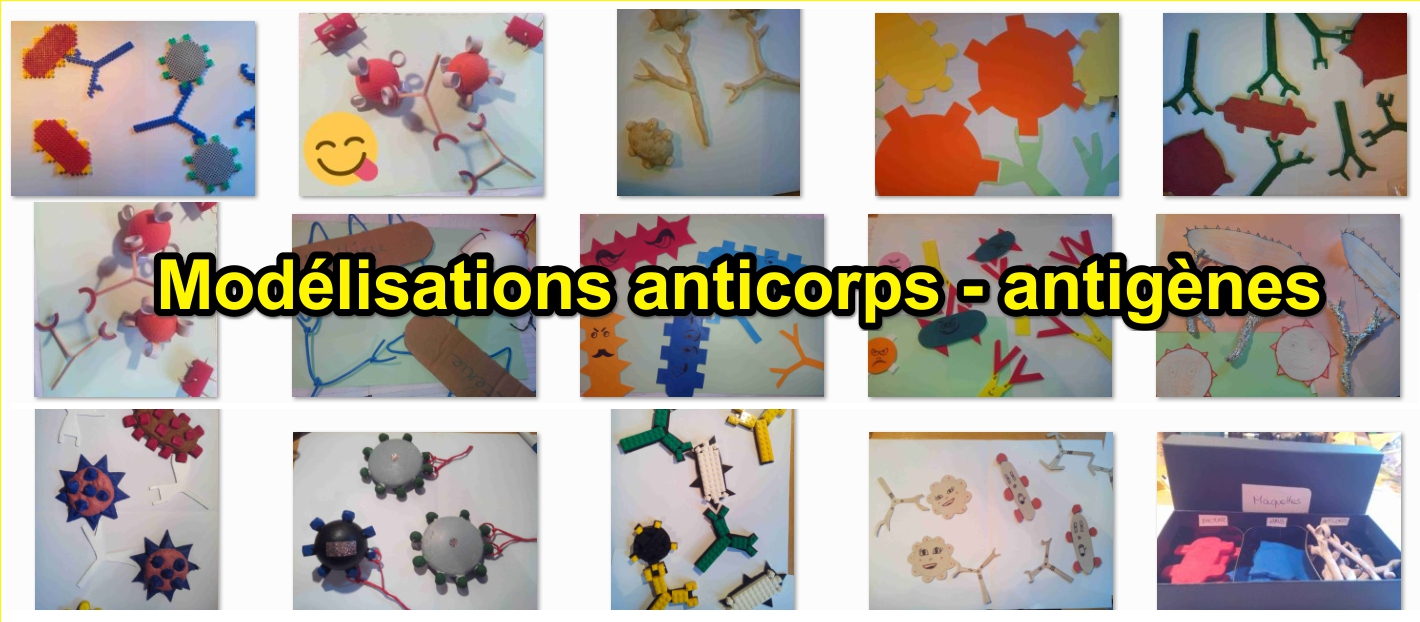 modelisation-anticorps-svt-systeme-immunitaire-cycle-4
