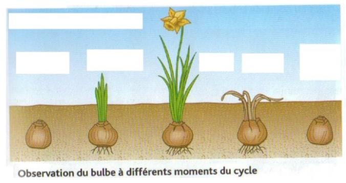 L'occupation du milieu au cours des saisons par les végétaux – SVT cycle 3