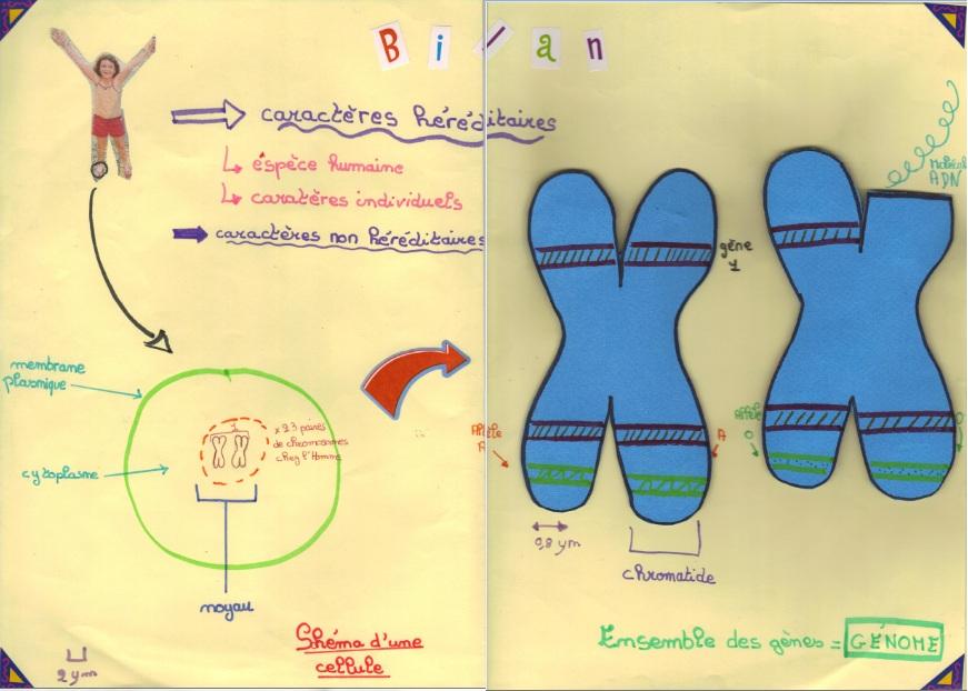 gene-et-chromosome-3eme