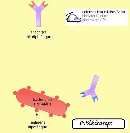 logiciel-anticorps