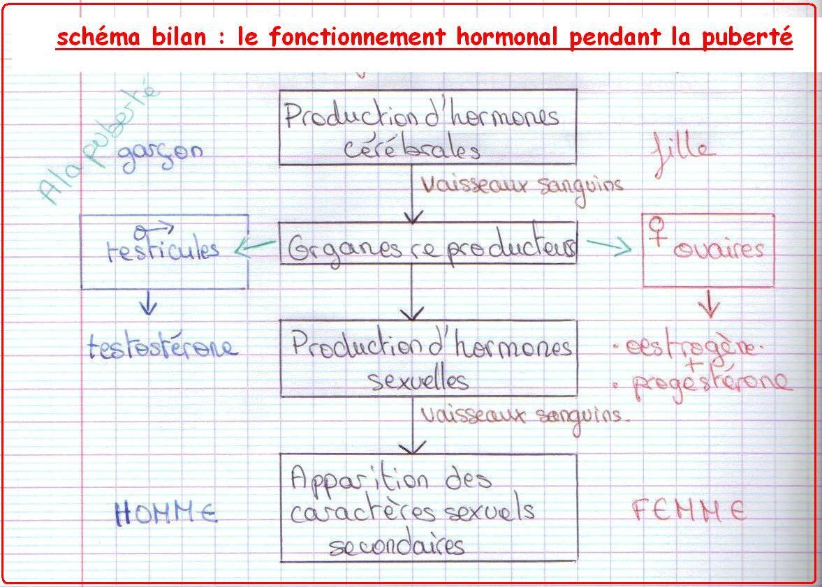 schema-bilan-hormones-svt