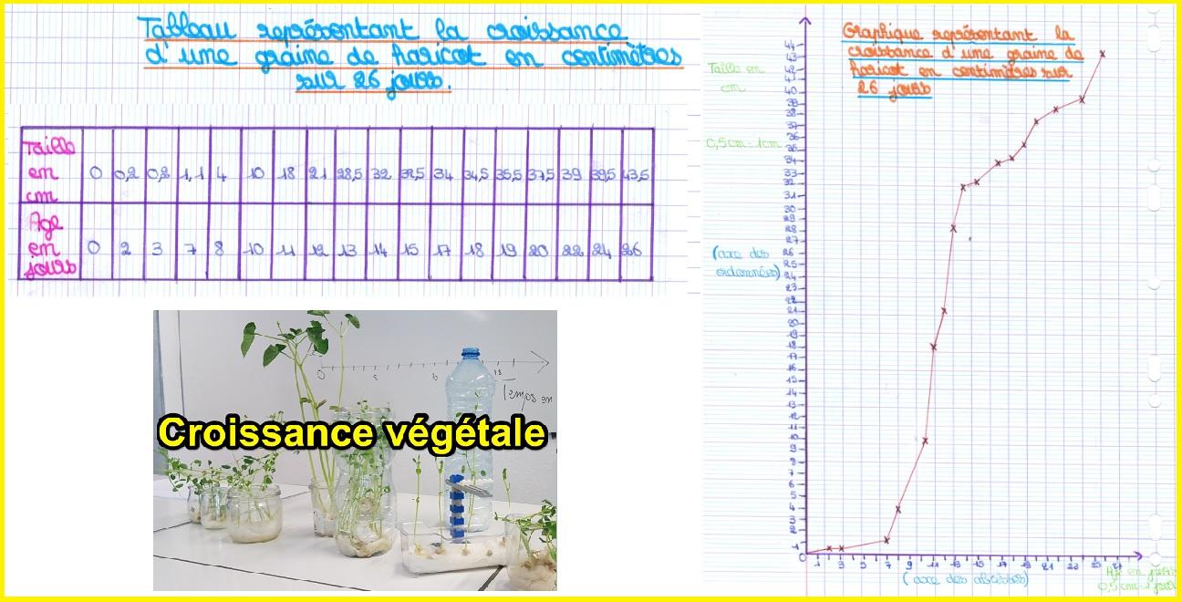 graphique croissance haricot tableau SVT 6ème