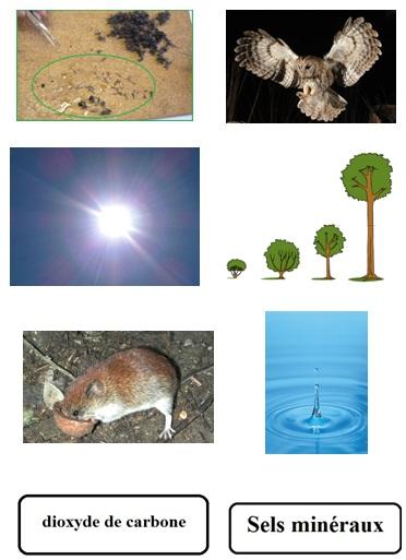 vignette-schema-bilan-matiere-6eme