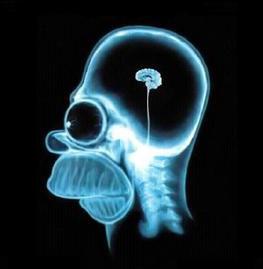 Une région cérébrale pour nous aider à rester raisonnable ?