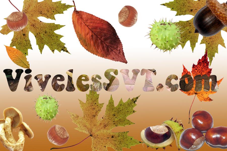 automnesvt