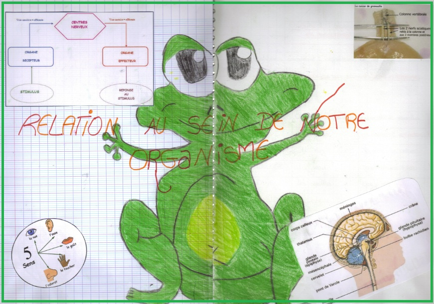 Relations au sein de l'organisme : communication nerveuse et hormonale