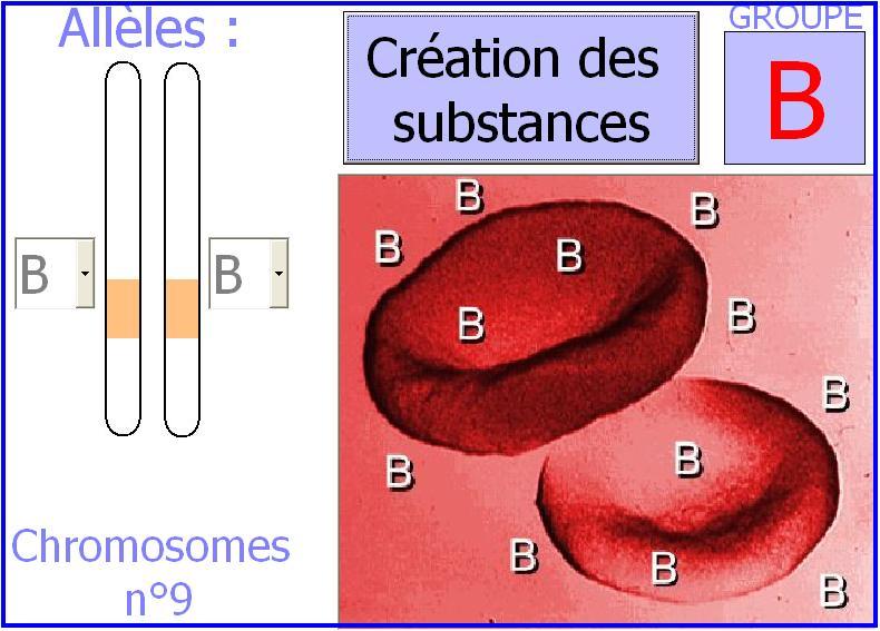 abo-groupe-sanguin1