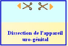 dissection
