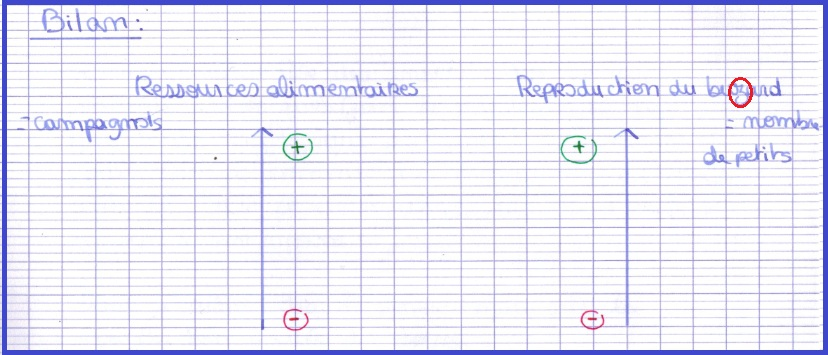 reproduction-sexuee-ressources-alimentaires