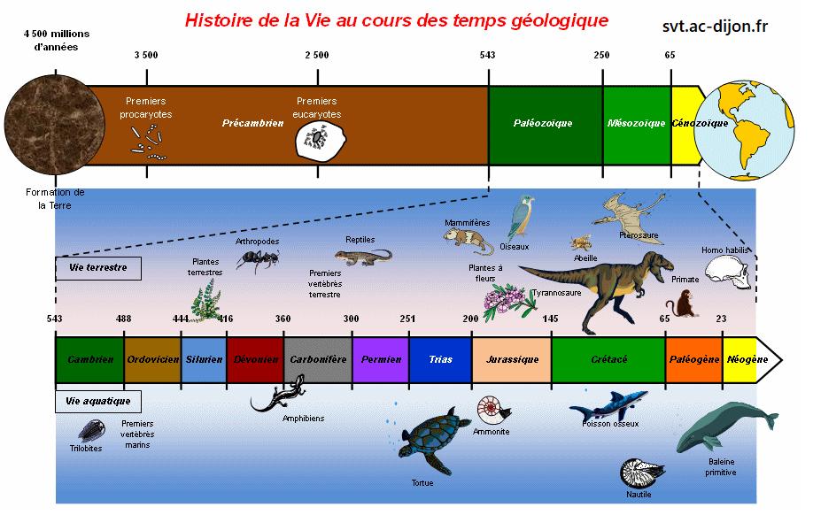 Evolution des organismes et histoire de la Terre
