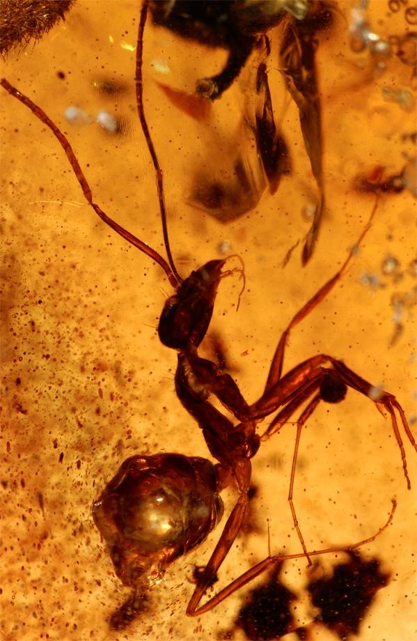 Énorme gisement d'ambre découvert en Inde