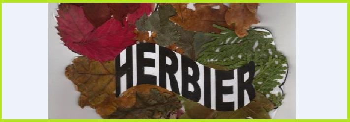 Les herbiers des 6èmes