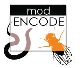 Le projet modENCODE : nouvelles avancées des généticiens