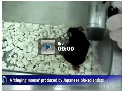 Des souris qui gazouillent comme des oiseaux